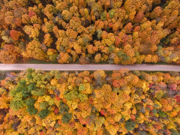 Shot from above of trees in Michigan